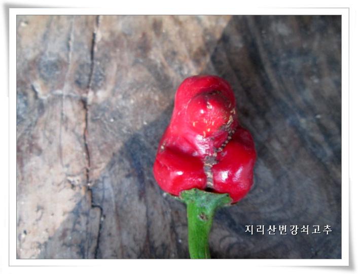 새모양-IMG_0259 (3).jpg