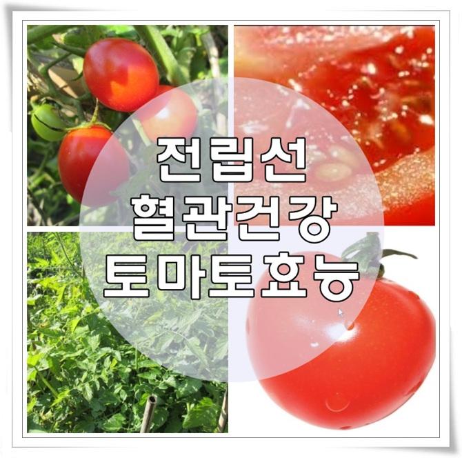 토마토효능.jpg