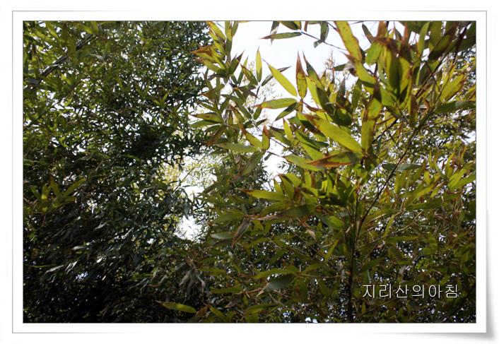 대나무-05.jpg