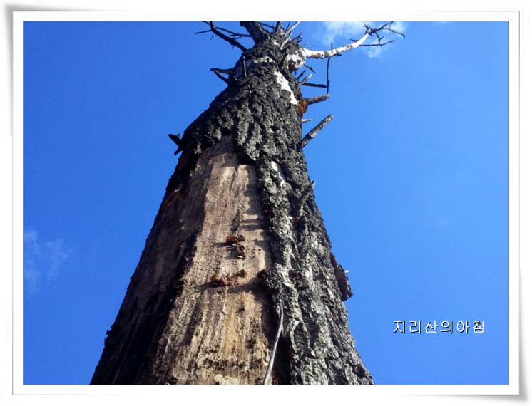 버드나무목이-2013-14.38.07 (17).jpg