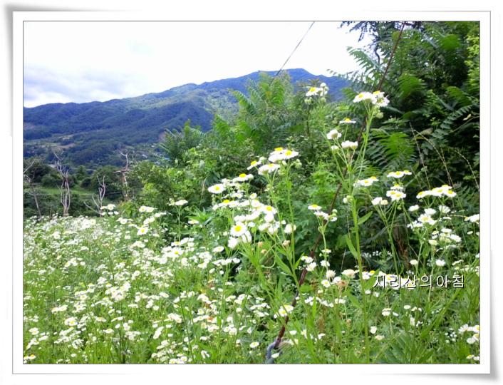 2011-06-29 11.55.37.jpg