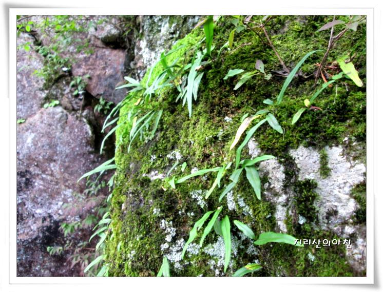 일엽초-IMG_5794 (2).jpg