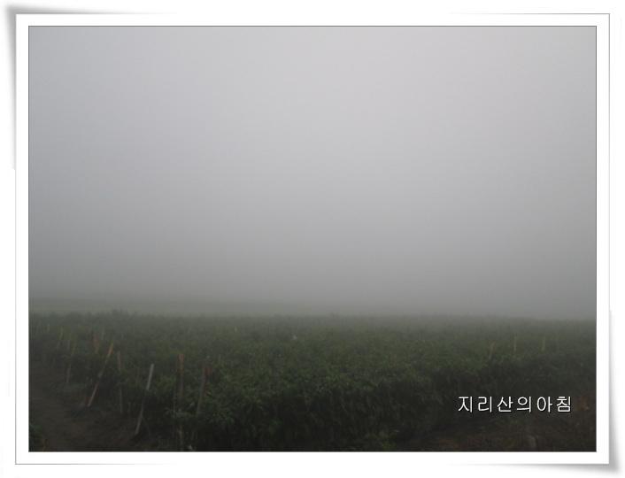 안개-IMG_0196 (2).jpg