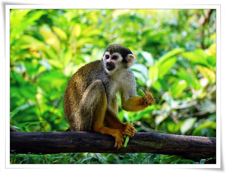 c-03-다람쥐원숭-이.jpg
