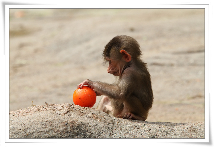 c-02-비비원숭이-아기원숭이.jpg