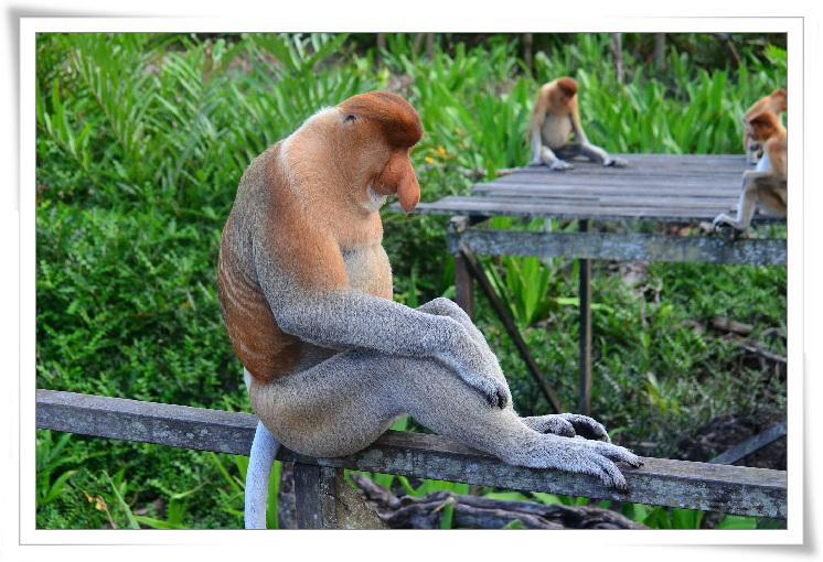 c-07-코원숭이1.jpg