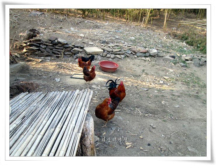 닭의해-정유년.jpg
