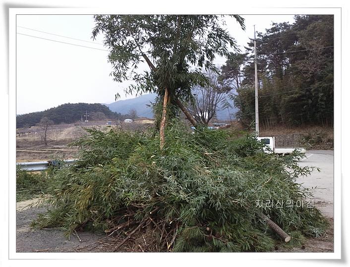 2012-01-31 12.16.41.jpg