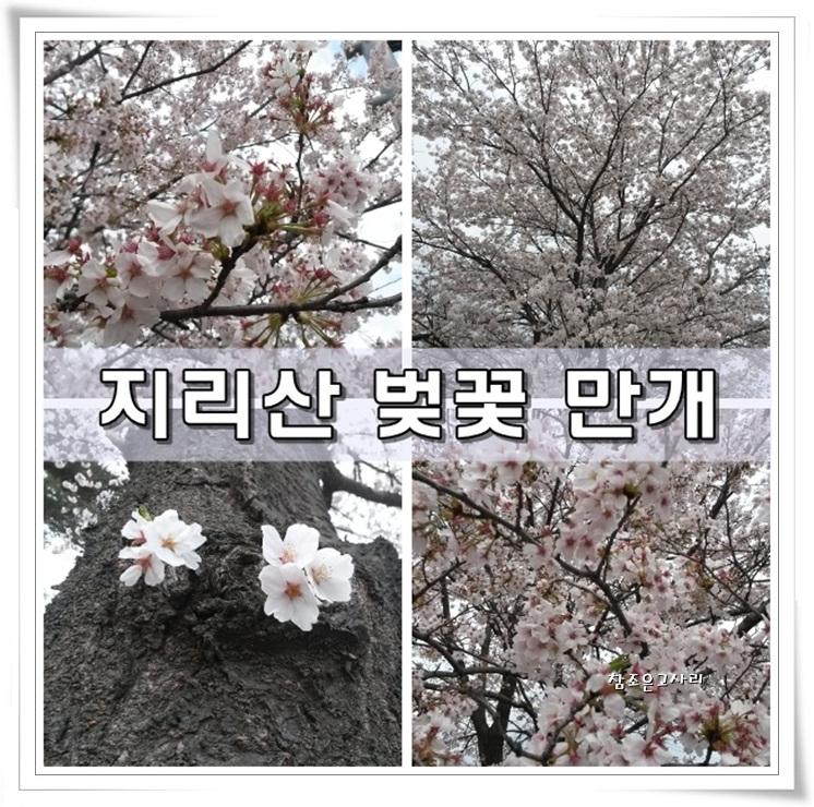 01-벚꽃.jpg