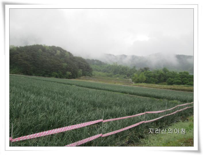 봄작물-IMG_2522 (3).jpg